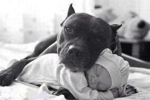 A safe pet