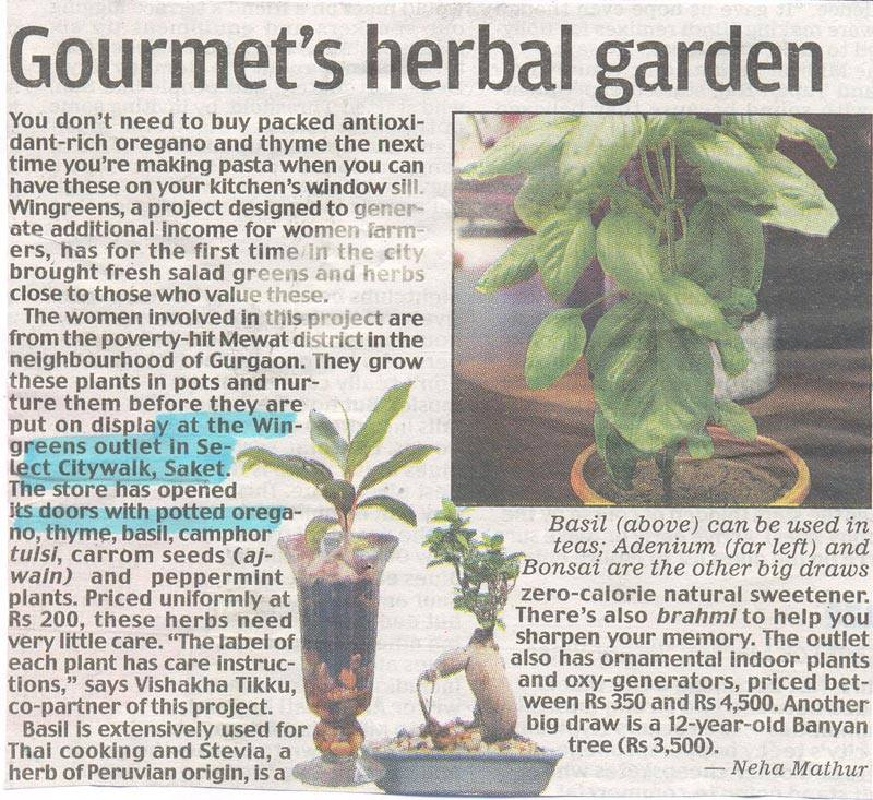 Gourmet's Herbal Garden-JUL