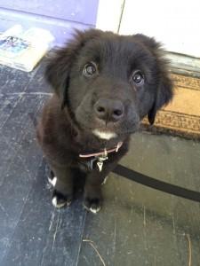 Those puppy eyes