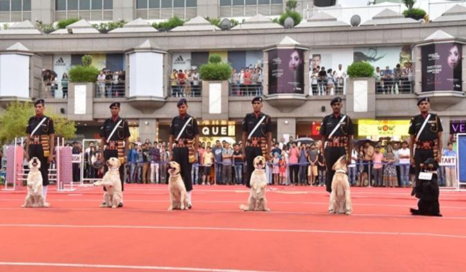 Army Dog Show (Kargil)