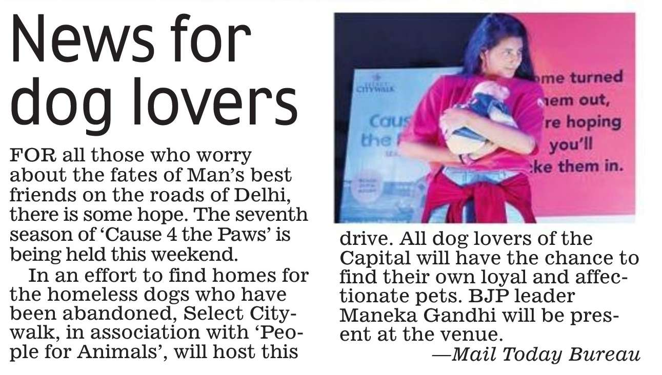 News For Dog Lovers